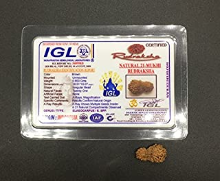 21 Mukhi Rudraksha from Java (Indonesia) Natural Twenty One Face Lord Kuber Rudraksha 18.51mm IGL Certified Exact Bead