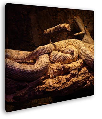 deyoli Zwei Klapperschlangen im Terrarium Format: 60x60 als Leinwandbild, Motiv fertig gerahmt auf Echtholzrahmen, Hochwertiger Digitaldruck mit Rahmen, Kein Poster oder Plakat