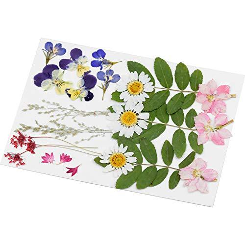 WEKON 24pcs Flores Secas Naturales Prensadas, Flores Prensadas Mixtas, Flores Prensadas Reales Orgánicas Pétalos Hojas para...
