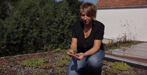 Teichbauzentrum Sankt Julian BigBag Substrat für Dachbegrünung Gründach Flachdachbegrünung Begrünung Dachabdichtung