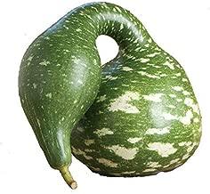Gourd Speckled Swan Squash Seeds, 15+ Premium Heirloom Seeds, (Isla's Garden Seeds), Non Gmo, 90% Germination, Highest Quality Seed