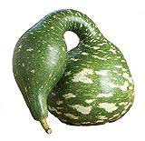 Speckled Swan Gourd...image