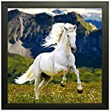MADVISON Wall Hanging Horse Photo Frame for Home, Office, Living Room (30x30 cm, Multicolor)