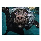Jigsaw Puzzle 500 Piece Wooden Puzzle Funny Black Labrador Retriever Dog Swimming with Expressive Face Picture Family Decorations Unique Birthday Present Suitable for Teenagers and Adults