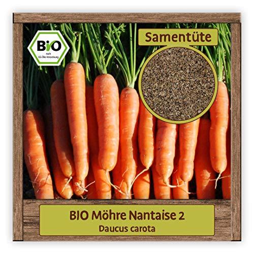 BIO Karotten Samen Möhren Gemüse Saatgut alte Sorte Nantaise 2