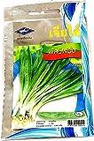 PLAT FIRM Germinación de Las Semillas: 2800 Semillas de perejil culantro Largo de Cilantro Cilantro Verduras Frescas Tailandia