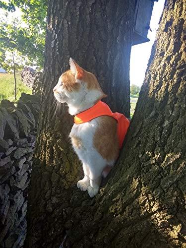 Mynwood Cat Jacket /Harnais haute visibilité pour chaton Orange jusqu'à 8 mois