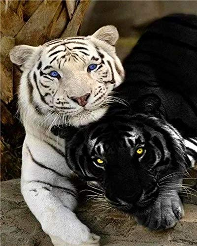 White Tiger and Black Tigerjigsaw Puzzle 1000 Pieces Adult Puzzle Wooden Puzzle Classic 3D Puzzle DIY Collectibles Modern Home Decoration,75X50Cm