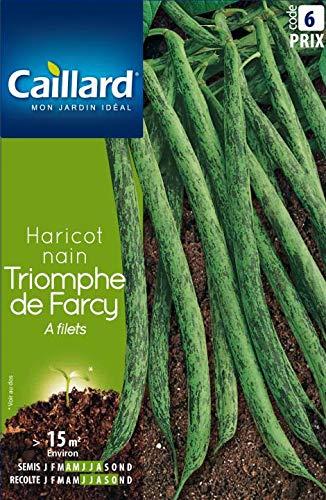 HARICOT NAIN TRIOMPHE DE FARCY