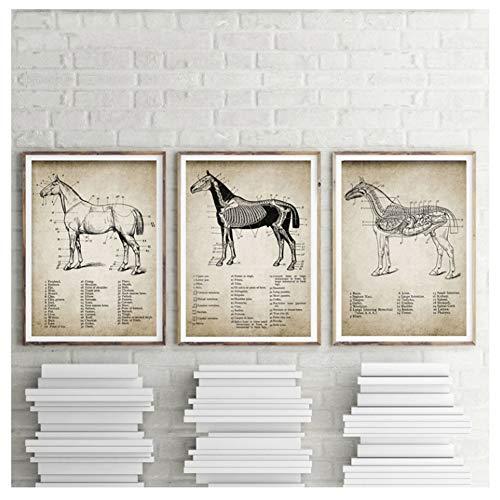 Vintage paard anatomie Canvas Posters Print paard anatomie illustratie Wall Art schilderij Paardensport foto's-40x60cmx3 zonder frame