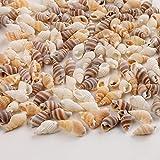 HERZWILD muschelperlen zum auffädeln ca. 270pcs natur muscheln bastelnmuscheln mit löcher Ideal zum Basteln, für Deko oder zum Schmuckherstellung(18-21mm) - 4