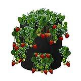 Xianheng1 植え袋 10ガロン イチゴ 植物