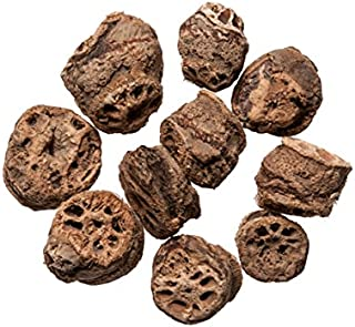 Ou Jie (Lotus Node) Medicinal Grade Chinese Herb 1 Oz.