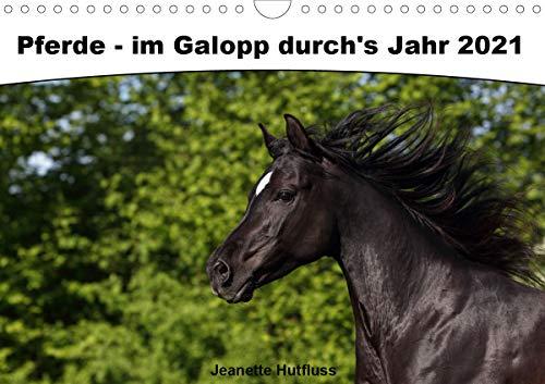 Pferde - im Galopp durch's Jahr 2021 (Wandkalender 2021 DIN A4 quer)