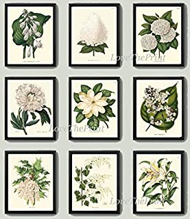 Botanical Flower Print Set of 9 Prints Antique Beautiful White Lily Grapes Fruit Magnolia Peony Spring Summer Garden Nature Home Room Decor Wall Art Unframed