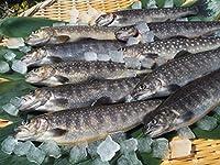 選べる清流の川魚 【岩魚 イワナ】冷凍, 9尾入(22cmサイズ) BBQ バーベキュー キャンプなどに