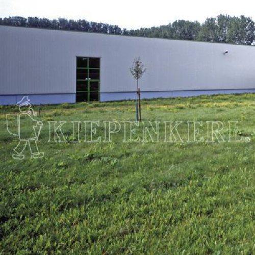Kiepenkerl 4000159801486 RSM 7.1.2 Gazon Classique pour Grands espaces 10 kg