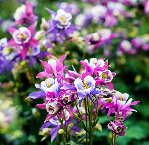 Best perennial flowers that bloom from spring to fall