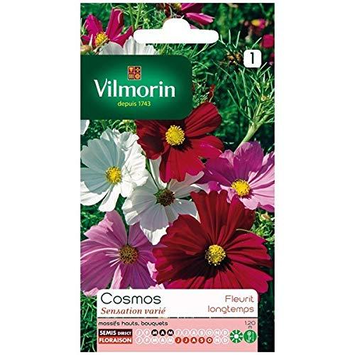 Vilmorin - Sachet graines Cosmos sensation varié