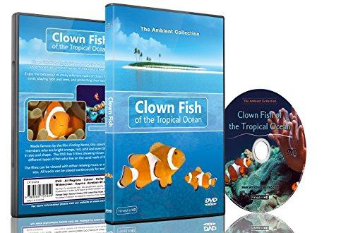 Clownfisch DVD - Clownfische im tropischen Ozean - Tauchen mit Nemo