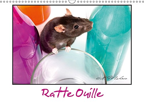 Ratte Ouille (Calendrier mural 2018 DIN A3 horizontal): Gentille muridée (Calendrier mensuel, 14 Pages ) (Calvendo Animaux) [Kalender] [Apr 01, 2017] Mahevo, Kathy: GENTILLE MURIDEE CALENDRIER ME