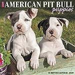 Just American Pit Bull Terrier Puppies 2020 Wall Calendar (Dog Breed Calendar) 3
