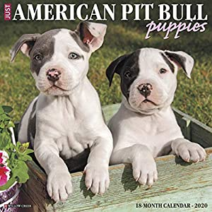 Just American Pit Bull Terrier Puppies 2020 Wall Calendar (Dog Breed Calendar) 14