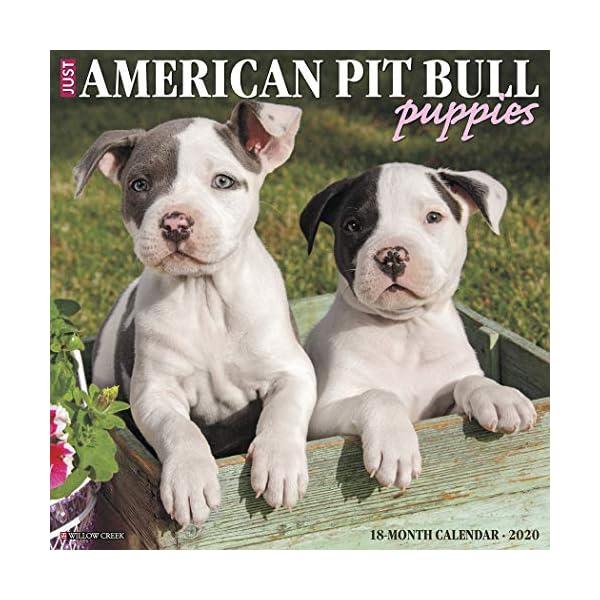 Just American Pit Bull Terrier Puppies 2020 Wall Calendar (Dog Breed Calendar) 1