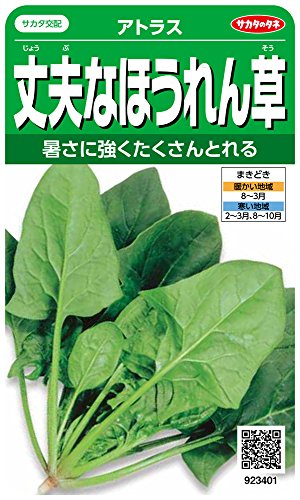 サカタのタネ 実咲野菜3401 丈夫なほうれん草 アトラス 00923401