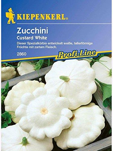 Zucchini Custard white Ufo weiss