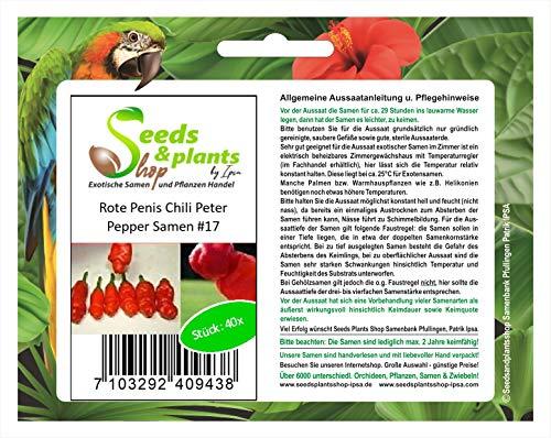 40x Rote Penis Chili Peter-Pepper Samen Saatgut Pflanze Garten #17