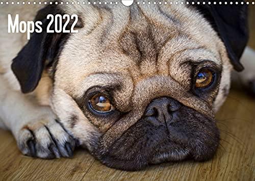 Mops 2022 (Wandkalender 2022 DIN A3 quer)