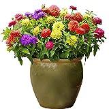 Yumhouse Semillas de Flores para Jardin,Balance Grass Flower Seeds seastern Easy to Live Outdoor Garden-Pink_500 g,Semillas de Flores Exterior trepadoras
