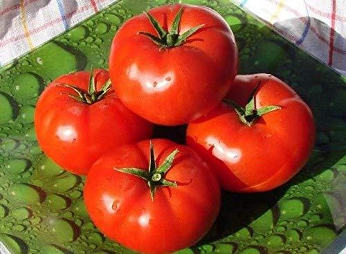 Portal Cool 50 graines: tomate Bobcat F1 Graines hybrides tomates rouges 10 graines ou 50 graines ou 100 graines