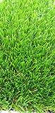 "Kunstrasen - Rasenteppich - Garten - Rasen""Calla"" Florhöhe 29 mm -4 farbig - Musterstück"