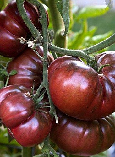 100 pcs Précipité New Plantes d'extérieur Promotion Jardin semences de tomates en pot fruits Bonsai Balcon de semences de légumes 7