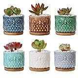 ComSaf Planta Maceta de Suculento Blanco 6.6 CM Paquete de 6, Cactus Maceteros de Ventana Cajas Decoración para Mesa de Comedor Sala de Estar Idea Regalo para Cumpleaños Boda Navidad