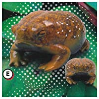 世界一かわいいカエル プニュプニュ きもかわ! アフリカジムグリガエル マスコット [5.E お腹:深緑色](単品) ガチャガチャ カプセルトイ