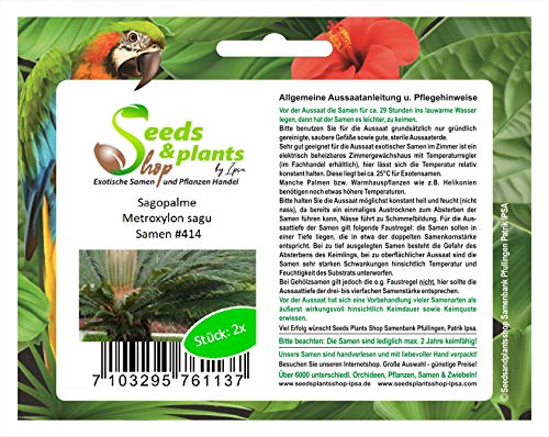 Stk - 2x Sagopalme Metroxylon sagu Sago Palme Garten Pflanzen - Samen #414 - Seeds Plants Shop Samenbank Pfullingen Patrik Ipsa