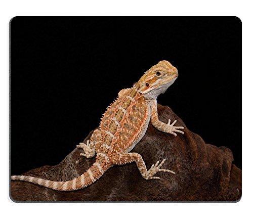 liili Mouse Pad de goma natural mousepad imagen ID: 18758591Beautiful Young normal Fase Bearded Dragon pogona vitticeps