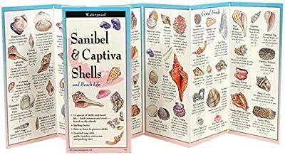 Sanibel & Captiva Shells and Beach Life (Foldingguides)