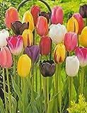 100 gemischte Tulpenzwiebeln Blumenzwiebeln Tulpen
