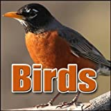 Bird, Duck - Mallard Duck: Constant Calling, Animal Ducks, Turkeys & Geese, Blockbuster Sound Effects