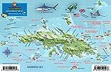 St. Thomas USVI Dive Map Fish ID Virgin Islands Franko Maps Waterproof Fish Card
