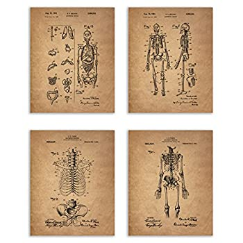 Best human skeleton picture Reviews