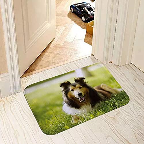 60x90 cm felpudo alfombra entrada Alfombrilla Alfombra de puerta decorativa suave para el hogar perros populares pug collie bull terrier bulldog foto de impresión felpudo para el suelo personalizable