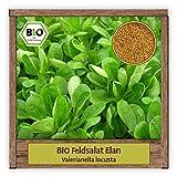 BIO Feldsalat Samen winterhart Sorte ELAN Salat Samen Gemüse Saatgut Wintersalat