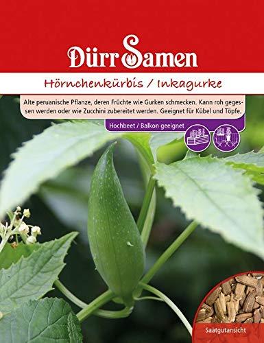 Hörnchenkürbis/Inkagurke, eine alte peruanische Nutz und Heilpflanze, Früchte schmecken wie Gurken