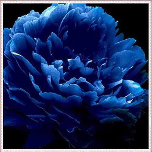 10 Stück blaue Pfingstrose Samen.Die schönsten und wohlriechendsten Blumensamen.Topfpflanzen Zierblumen