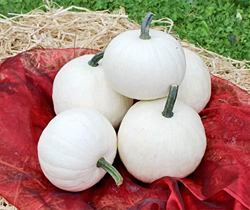 Bobby-Seeds Saatzucht - Gemüsesamen & -pflanzen, Größe Portion